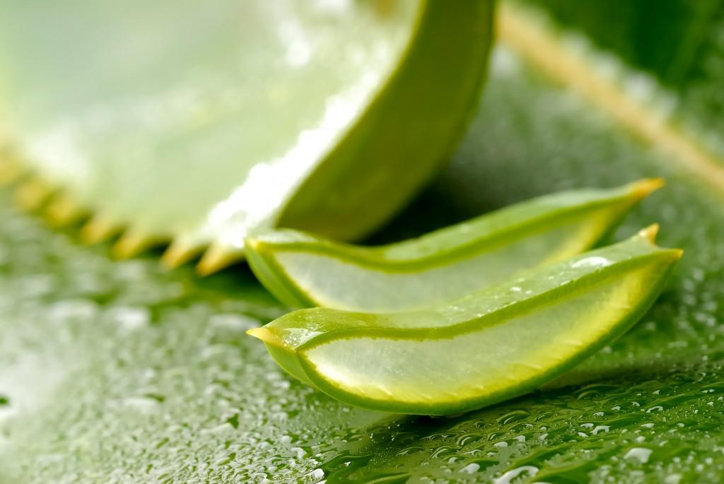 Aloe vera, ingredient minune pentru dinți