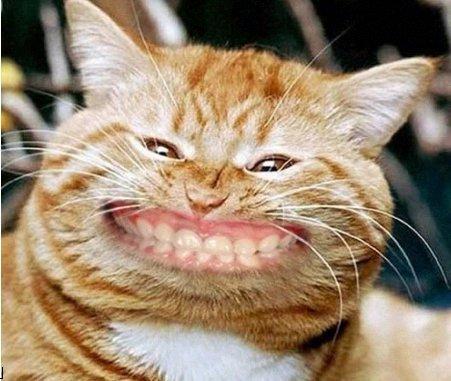 pisica.dinti.drepti