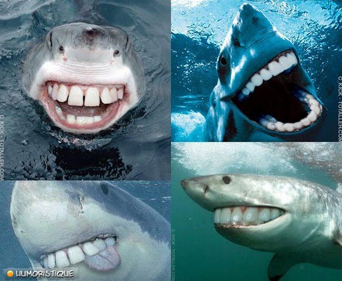 rechin.dinti.drepti
